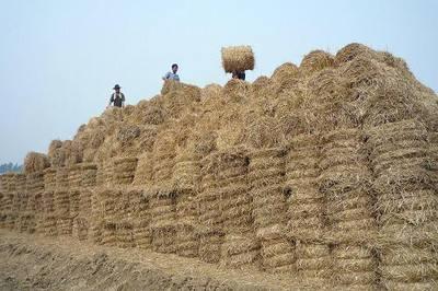 河南花生秧草粉价格多少钱一吨