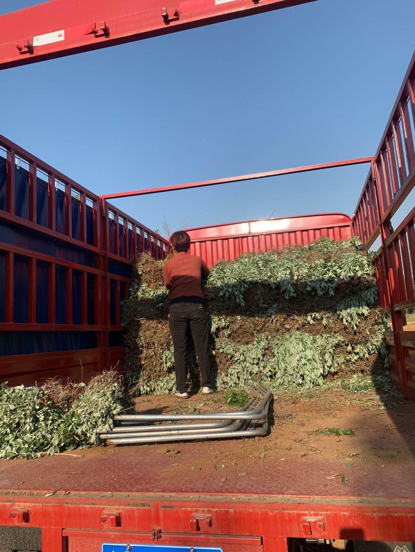 艾草种植一亩地投资多少钱