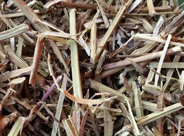 哪里有花生秧草粉
